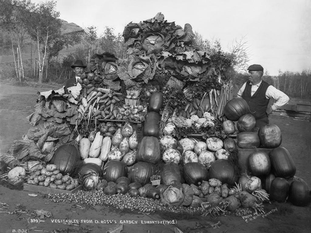 Man standing beside very large pile of vegetables.