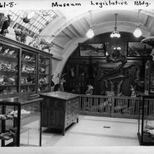 Natural history display at the Legislative Building, c. 1945, Provincial Archives of Alberta, Photo GR1964.0009/0001